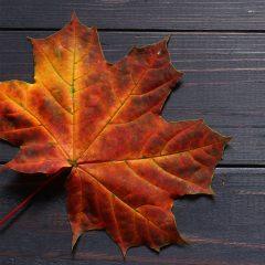 Maple-Orange Balsamic Vinaigrette